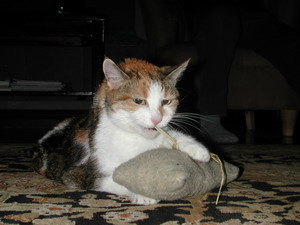 Murka with catnip pillow